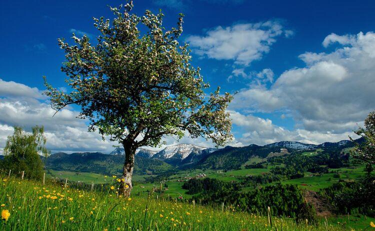 Frühlingserwachen in Oberstaufen © Oberallgäu